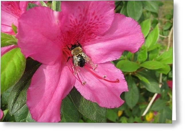 Bee Cause Greeting Card by Deborah Lacoste