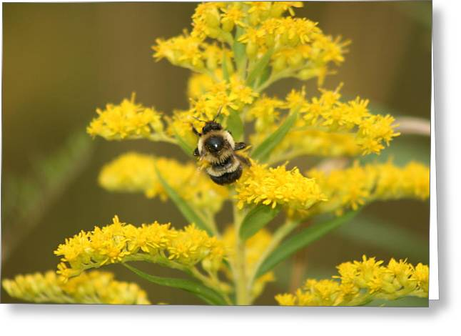 Greeting Card featuring the photograph Bee Closeup by Paula Brown