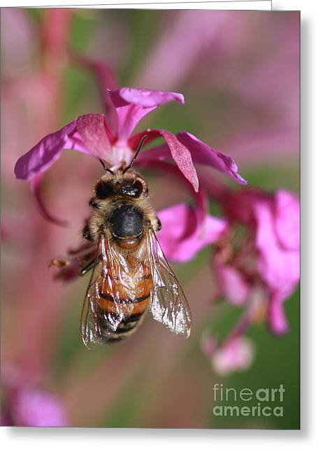 Bee Collecting Nectar Greeting Card