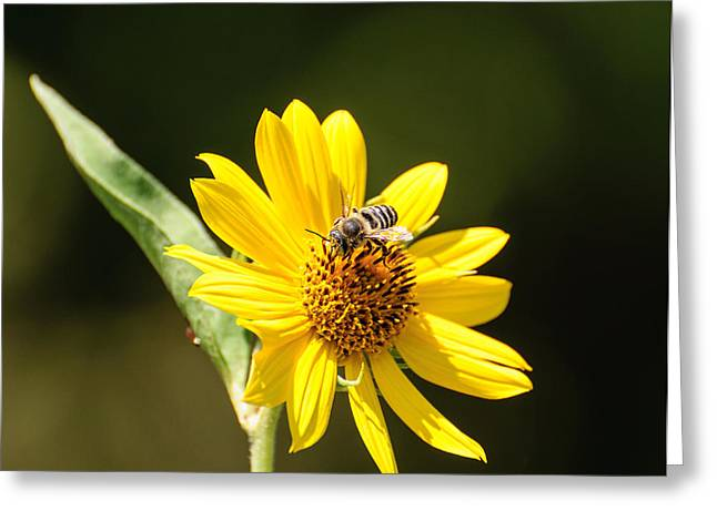 Bee Flower Greeting Card