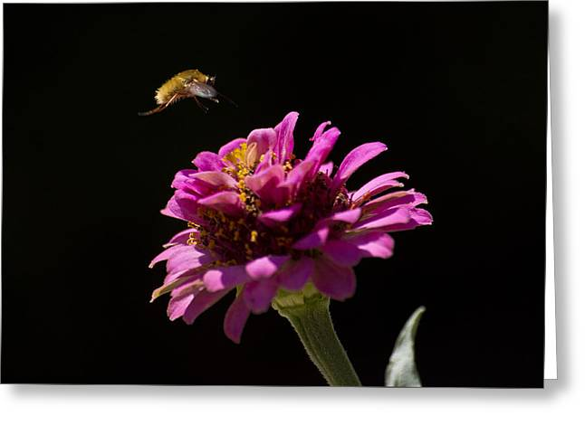 Bee Fly In Flight Greeting Card by Shelly Gunderson