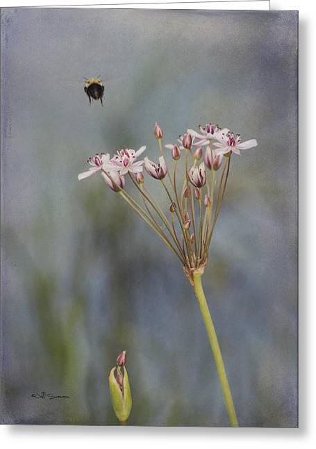 Bee Gone Greeting Card by Jeff Swanson