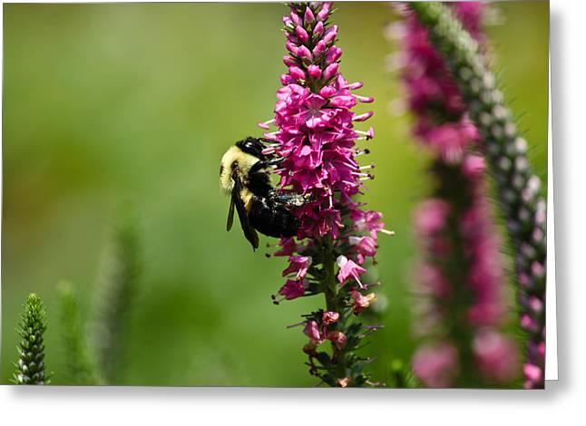 Bee Heaven Greeting Card