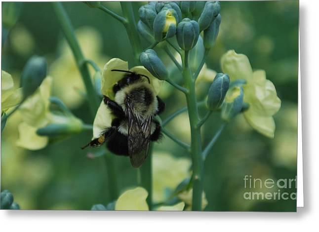 Bee Hugs Greeting Card