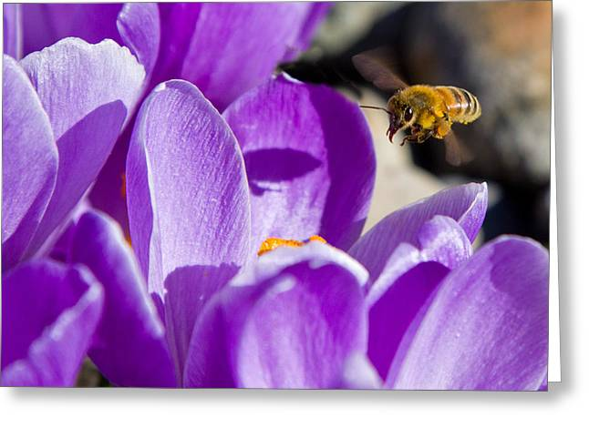 Greeting Card featuring the photograph Bee In Flight by Bob Noble Photography