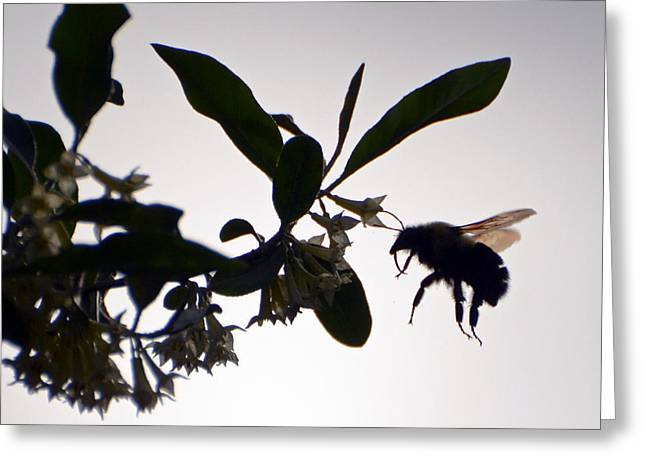 Greeting Card featuring the photograph Bee In Flight  by Kerri Farley