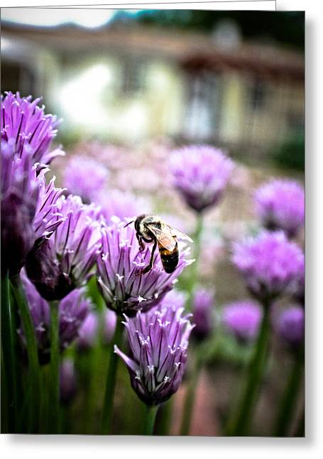 Bee In The Chives Greeting Card by Joel Loftus