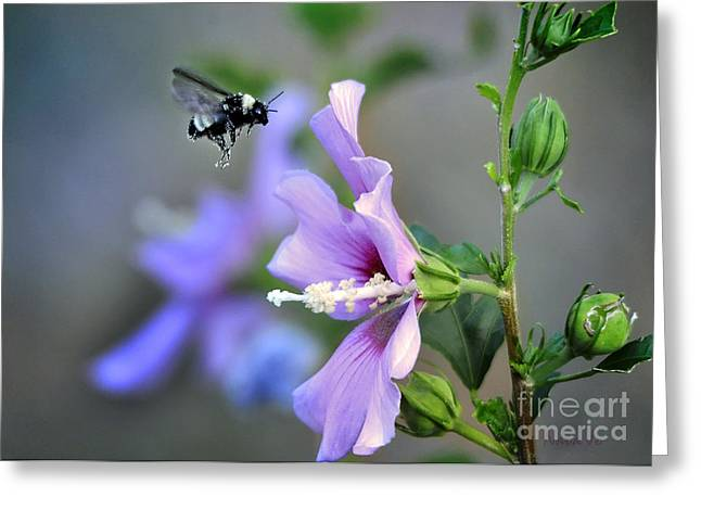 Bee Lavender Greeting Card by Nava Thompson