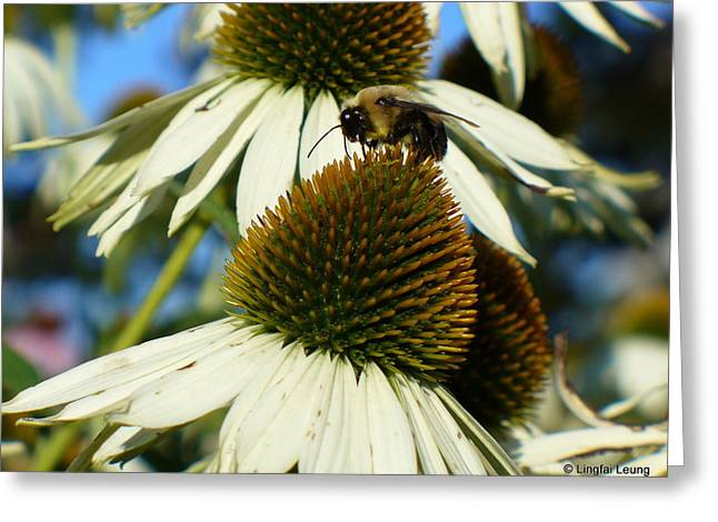Greeting Card featuring the photograph Bee On A Cone Flower by Lingfai Leung