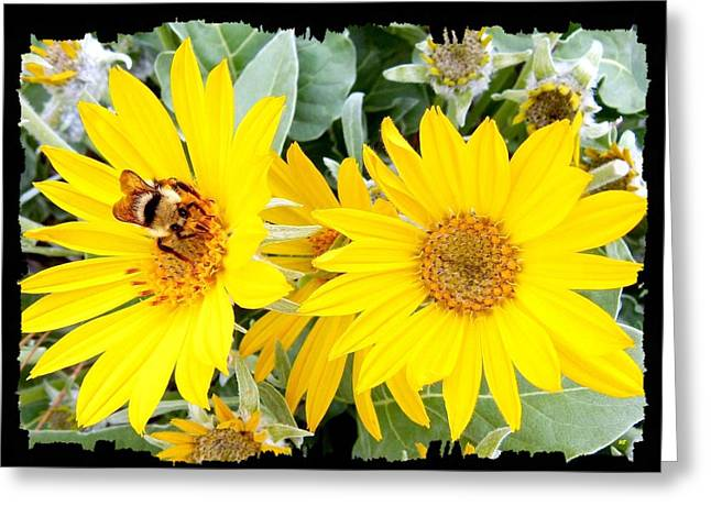 Bee On A Wild Sunflower Greeting Card by Will Borden