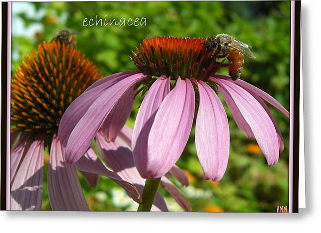 Greeting Card featuring the photograph Bee On Echinacea by Heidi Manly