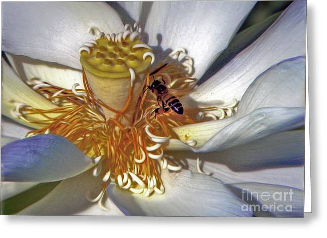 Bee On Lotus Greeting Card