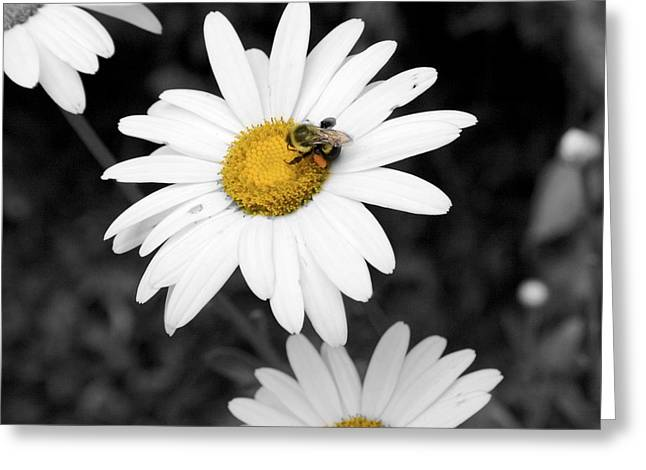 Bee On My Daisy Greeting Card by Kimberly Elliott