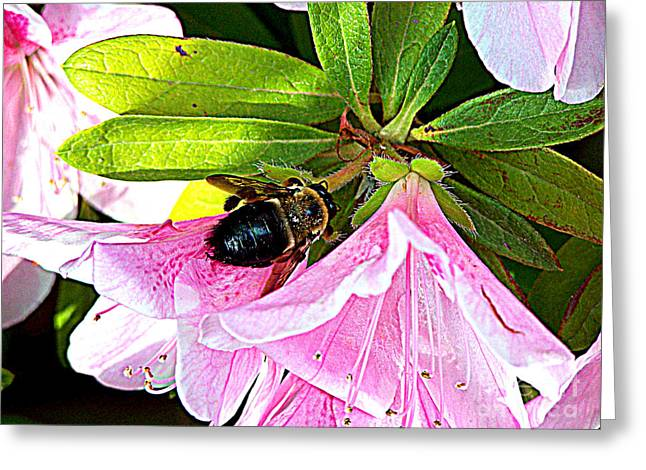 Bee On  Pink Azalea Greeting Card by Kathy  White