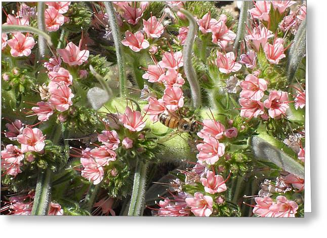 Bee On Pink Flowers Greeting Card