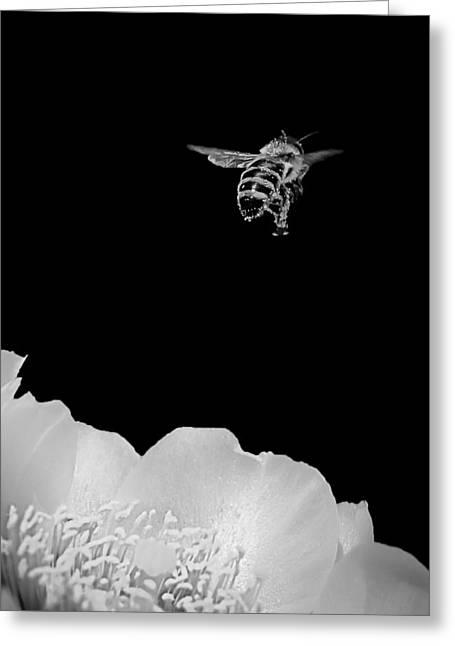 bee rising #2 B/W Greeting Card