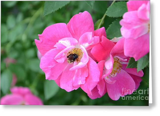 Bee Rosy Greeting Card
