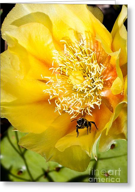Bee Stands Guard Greeting Card
