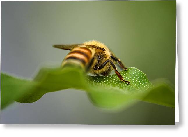 Bee Still Greeting Card