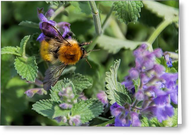 Greeting Card featuring the photograph Bee Too by David Gleeson