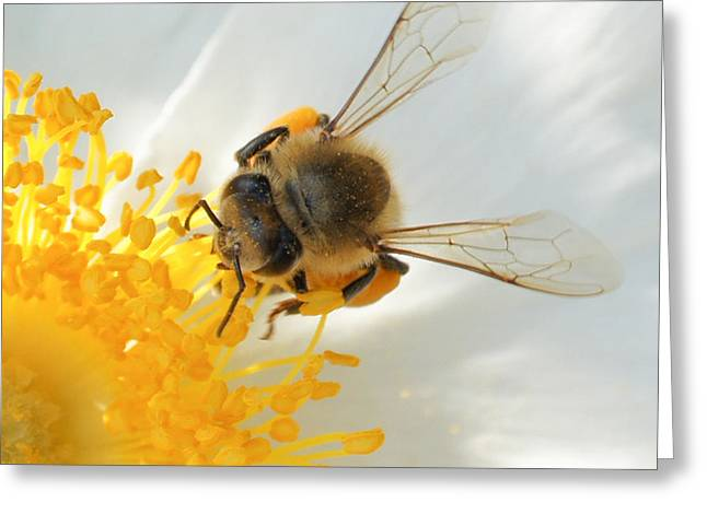 Greeting Card featuring the photograph Bee-u-tiful Squared by TK Goforth