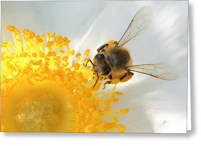 Greeting Card featuring the photograph Bee-u-tiful by TK Goforth