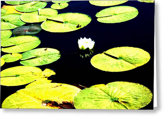 Bee Watching Lotus Greeting Card by Marcello Cicchini