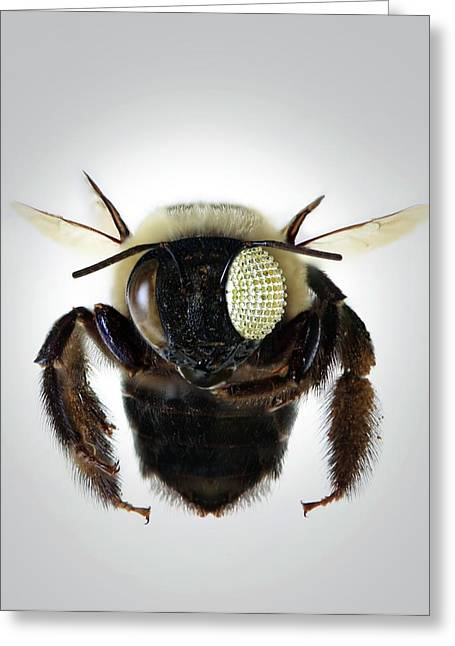 Bee With Electronic Compound Eye Greeting Card
