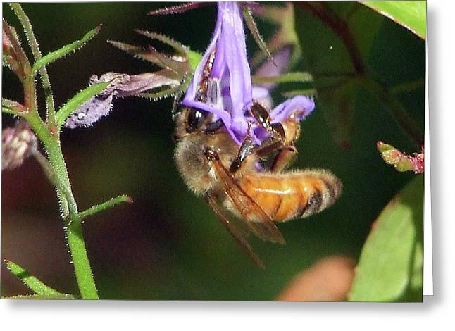 Greeting Card featuring the photograph Bee With Flower by Ron Roberts