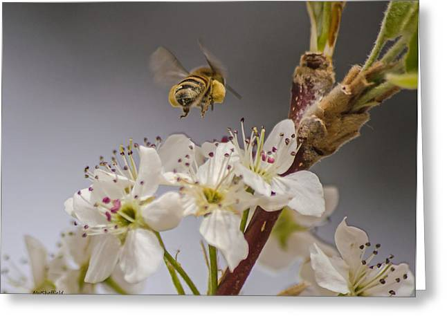 Bee Working The Bradford Pear 2 Greeting Card