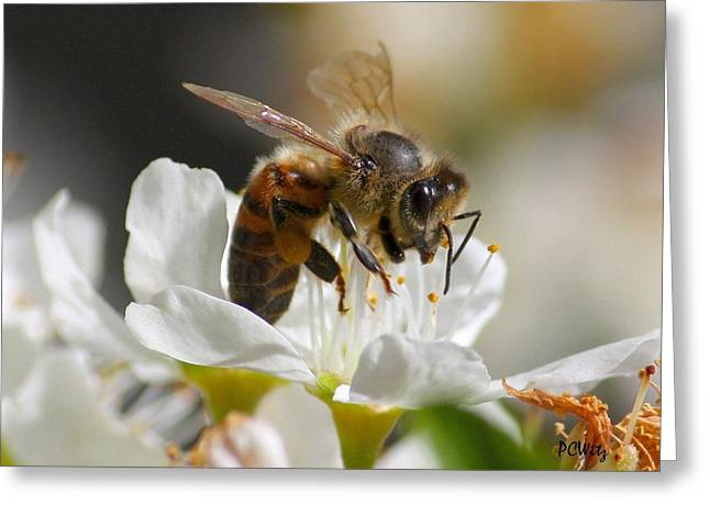 Greeting Card featuring the photograph Bee4honey by Patrick Witz