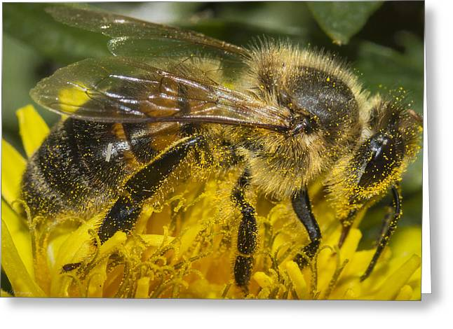 Beeautiful Worker Greeting Card by Megan Check