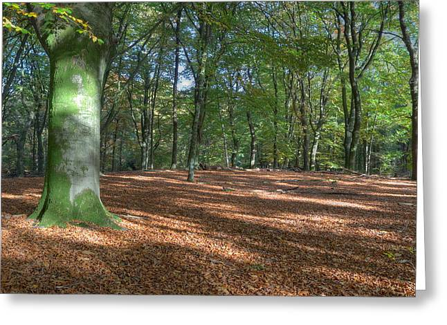 Beech Forest In Autumn On The Veluwe Greeting Card by Ronald Jansen