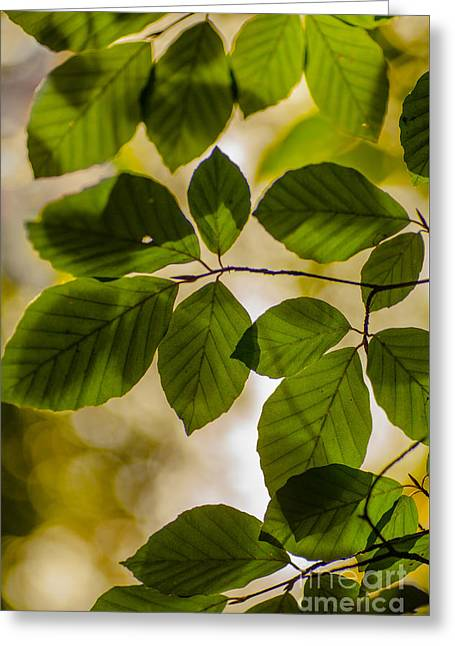 Beech Leaves And Bokeh Greeting Card by Jan Bickerton