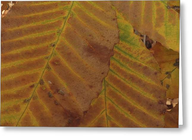 Beech Leaves Greeting Card