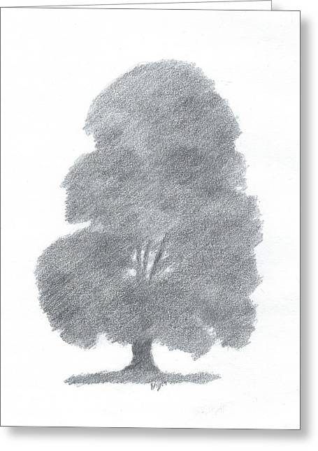 Beech Tree Drawing Number Four Greeting Card by Alan Daysh