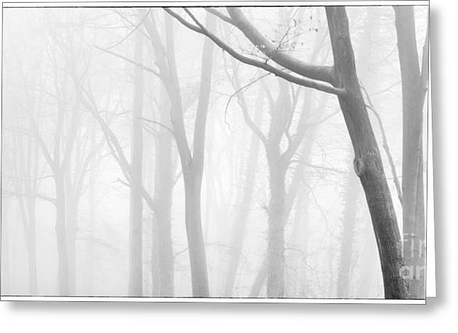 Beech Wood Shades Of Grey Greeting Card by John Potter