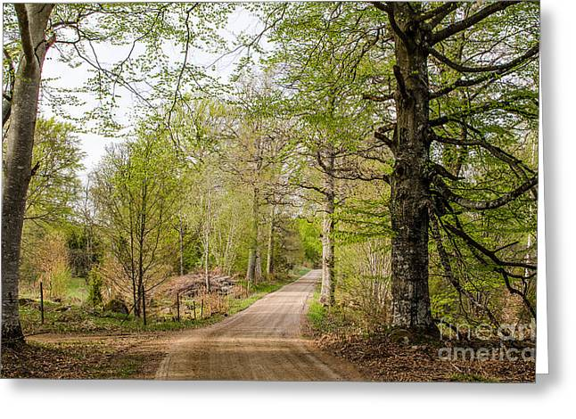 Greeting Card featuring the photograph Beeches At Springtime by Kennerth and Birgitta Kullman