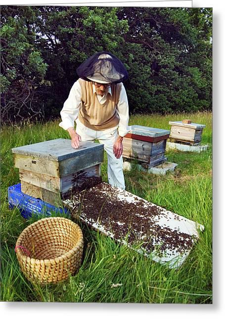 Beekeeper Hiving A Honeybee Swarm Greeting Card