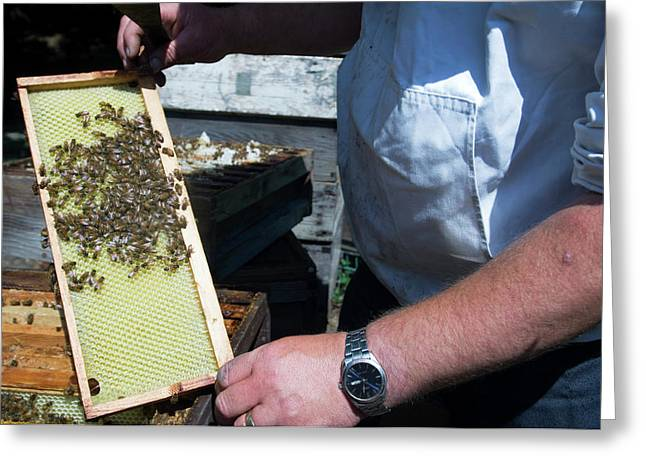 Beekeeper Holding A Brood Frame Greeting Card