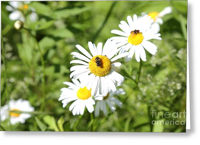 Bees And Daisies Greeting Card by Suzi Nelson