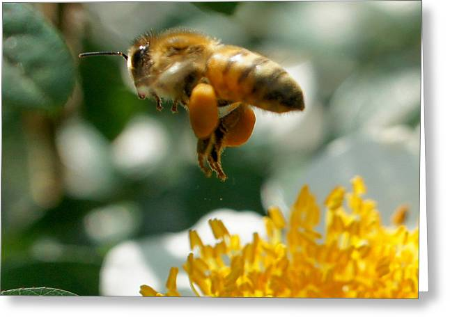 Greeting Card featuring the photograph Bee's Feet Squared by TK Goforth