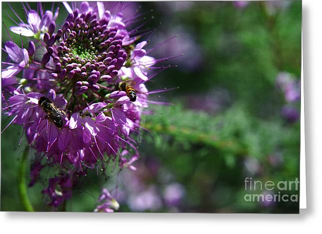 Bees In Purple Greeting Card