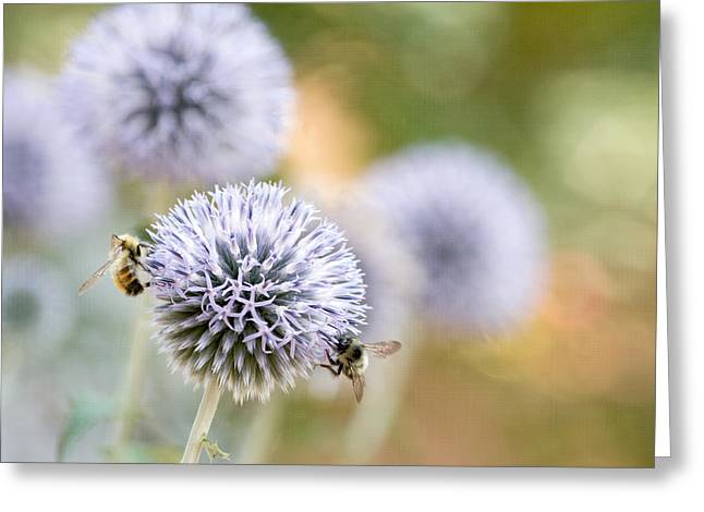 Greeting Card featuring the photograph Bees In The Garden by Peggy Collins