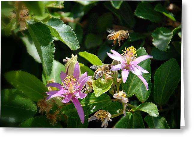 Bee's Larger Greeting Card by Kelli Donovan