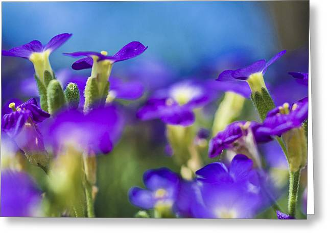 Bee's Point Of View Greeting Card by Arkady Kunysz