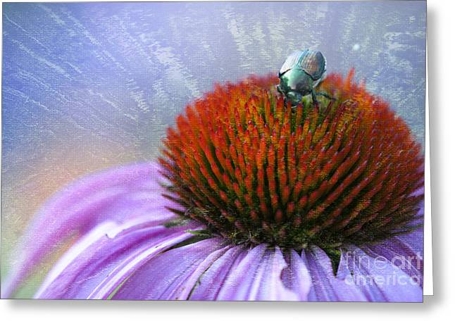 Beetlemania Greeting Card by Juli Scalzi