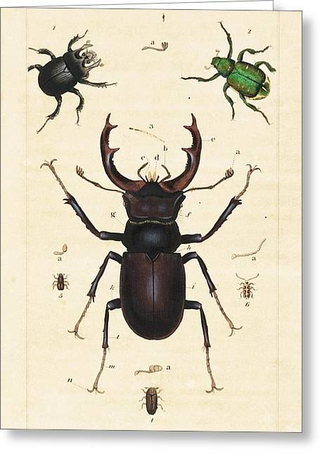Beetles Greeting Card by King's College London