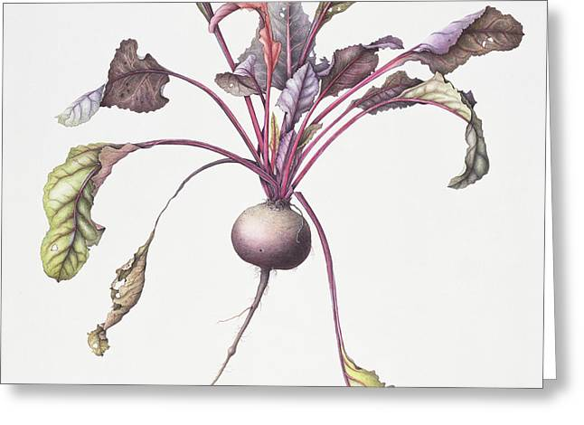 Beetroot Greeting Card by Margaret Ann Eden