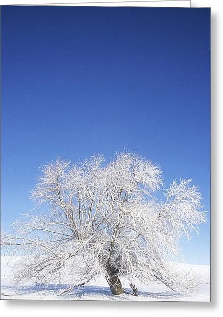 Before The Thaw Greeting Card by Latah Trail Foundation